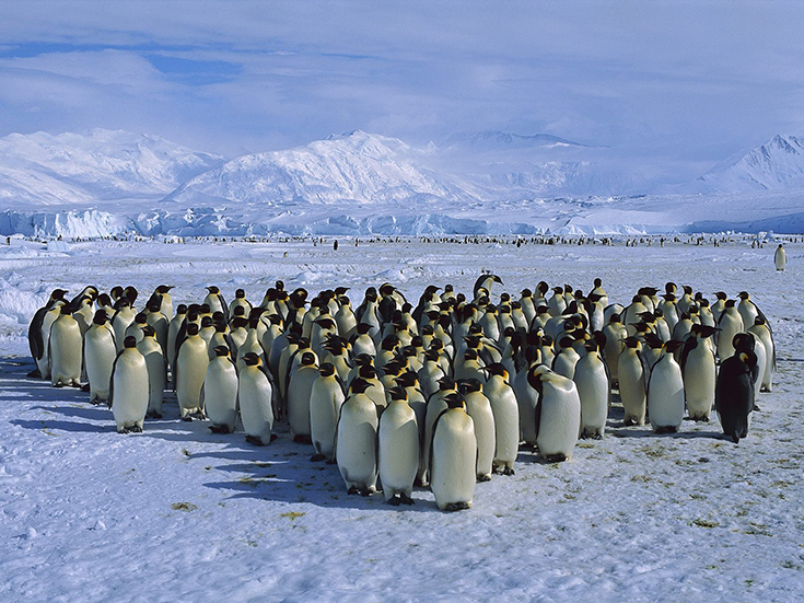 Emperor Penguin Colony, Cape Roget, Ross Sea, Antarctica